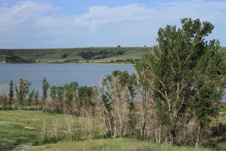 Trees On Lake Shore