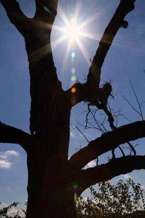 dormant: Silhouette Of Dead Tree With Bright Sunshine