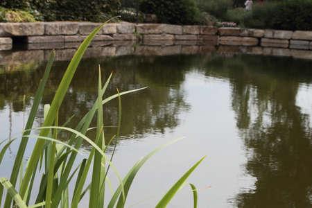 Reflecties in een vijver Stockfoto