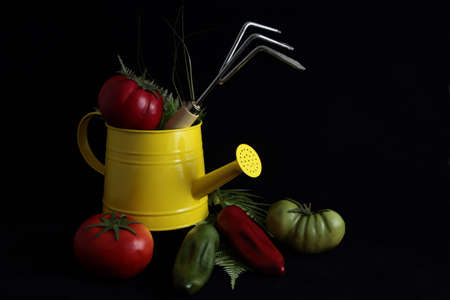 sidelight: Gardening Still Life With Vegetables Stock Photo