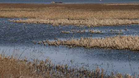 cheyenne: Marsh With Great Blue Heron In The Distance Stock Photo