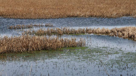 Pool Of Water In A Marsh Stock Photo