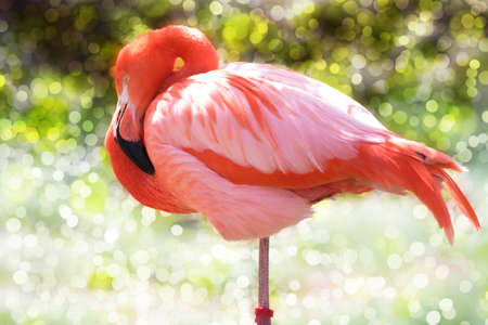 Pink Flamingo On A Sunny Day Stock Photo