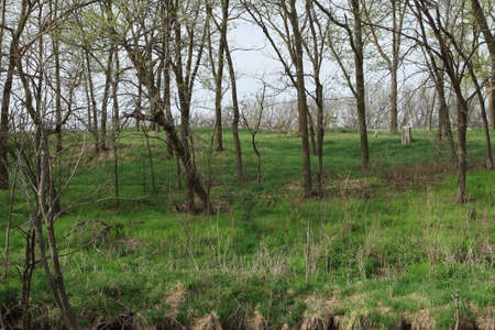 Early Spring Wooded Area Stock Photo