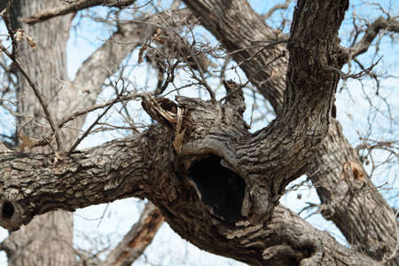 lurking: Creepy Tree Branch Creature