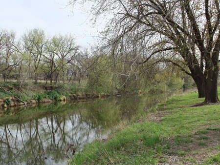 Rivers Edge With Dormant Trees And Spring Grass