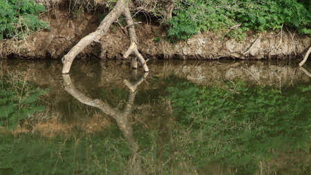 Natural Reflections In Still River Water