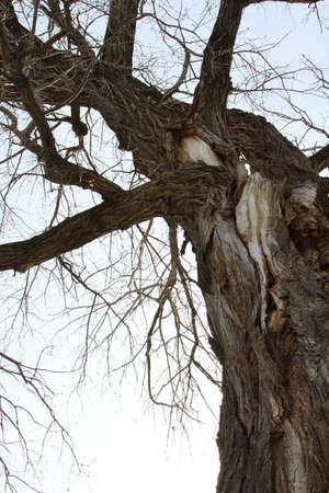 tall tree: CloseUp Detail Of A Very Tall Tree