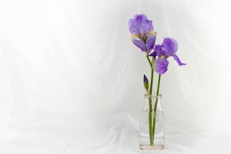 Two Purple Iris Flowers In A Jar Stock Photo