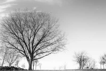 Black And White Nature Stock Photo