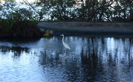 Beautiful Crane resting in the shallow water Reklamní fotografie