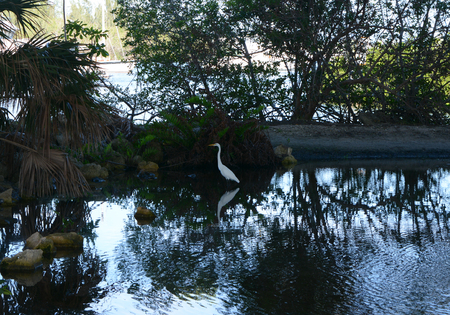 Crane resting in the calm water showing beautiful reflection Reklamní fotografie