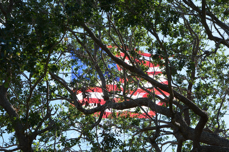 US Flag Flying Proud through the view of Trees
