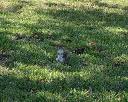 Very still Squirrel playing possum