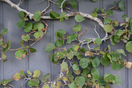 Background of tree limb and leaves on a wooden wall
