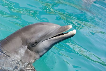 Dolphin in ocean Stock Photo - 405920