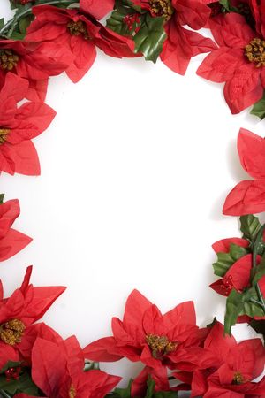Christmas red poinsettias background over white photo