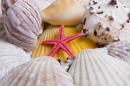 Colorful seashells including a red star fish photo