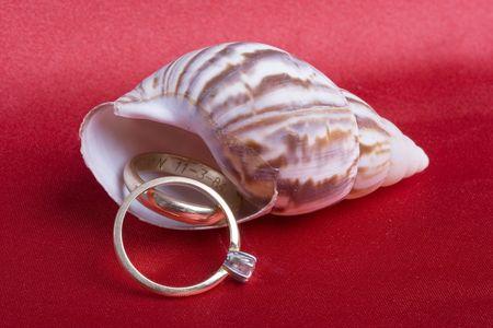 Engagement and wedding band on a seashell photo