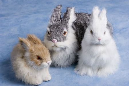 white cute easter bunnies on a bright blue background