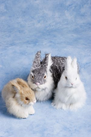 cute easter bunnies on a bright blue background Фото со стока