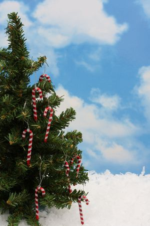 Tree with candy canes on snow photo