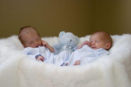 newborn animal: Newborn twin boys sleeping in a basket Stock Photo