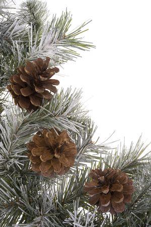 pinecones: Wreath branch with pinecones