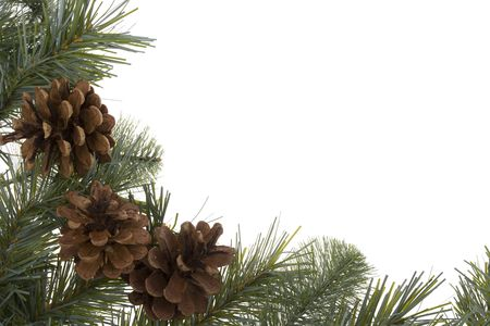pinecones: Wreath branch with pinecones isolated on white
