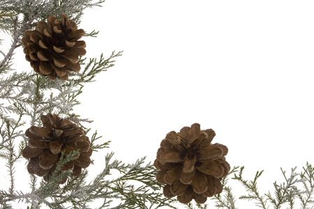 Wreath branch with pinecones isolated on white Stock Photo - 2059244