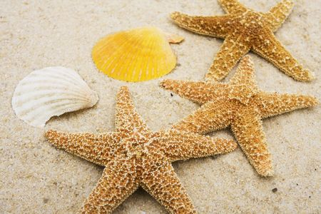 Three starfish and colorful seashells on sand Stock Photo - 2166415