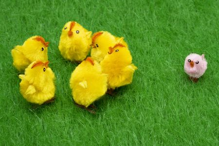 chicks sitting on grass – odd man out photo