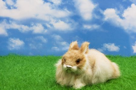 Easter bunny on grass with sky background Stock Photo