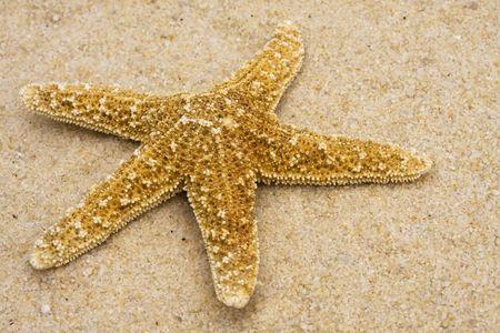A single Starfish on sand for a beach theme