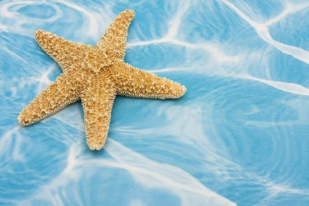 Starfish on blue background � a summer background photo