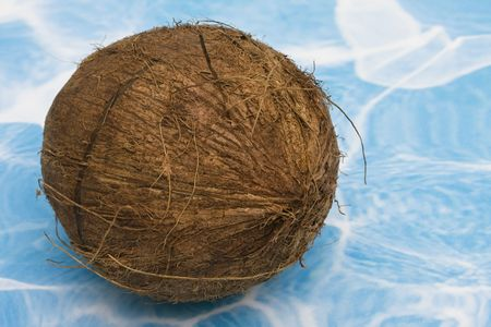 Coconut sitting on a blue and white background Stock Photo - 3280901