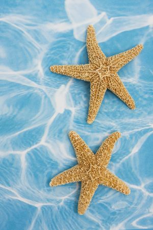 Starfish on blue background – a vacation background photo