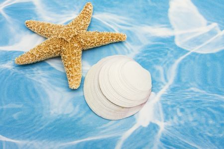 vacationing: Starfish and seashells on a blue and white background