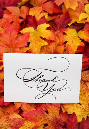 Thank you card on leaves with copy space Stock Photo - 3377764