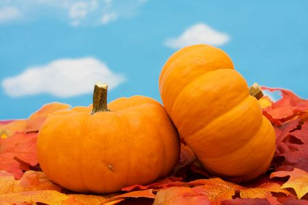 Fall leaves with pumpkin on sky background, fall harvest photo