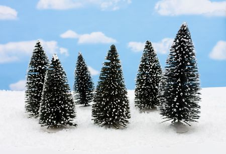 evergreen trees: A group of evergreen trees on snow with sky background, merry Christmas Stock Photo