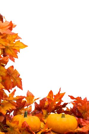 falls: Fall leaves with pumpkin on white background, fall harvest