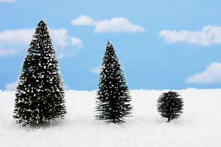 evergreen trees: Three evergreen trees on snow with  , merry Christmas