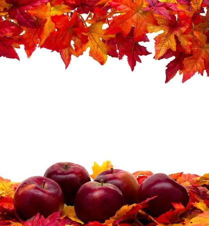 Fall leaves with red apples on white background, fall scene photo