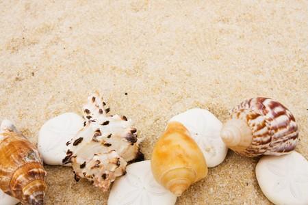 sand dollar: Seashells making a border on sand background, sand dollar border