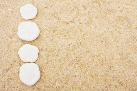 sand dollar: D�lares de arena haciendo una frontera de fondo sobre la arena, la arena d�lar frontera