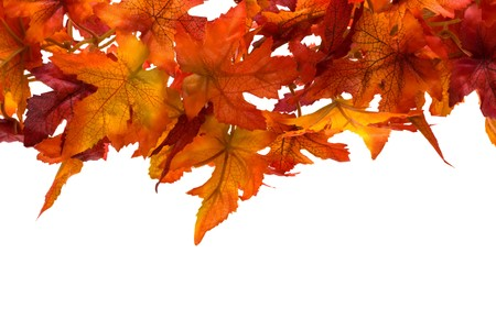 Fall leaves on white background, fall leaf border Stock Photo