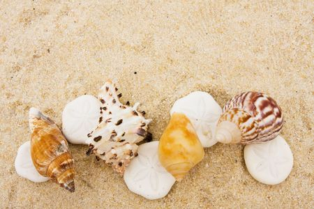 Seashells making a border on sand background, sand dollar border