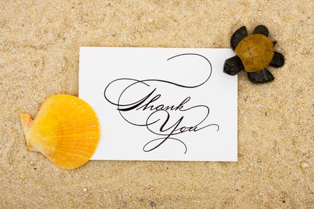 A shell and a turtle sitting on a thank you card with a sand background, turtle photo