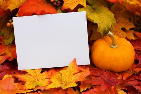 caes: Una tarjeta en blanco con una calabaza sentado sobre un fondo de hoja de oto�o, en blanco de la tarjeta